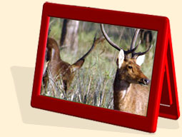 kanha tour packages